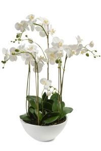 Bilde av Kunstig Majestetisk Orkide 80cm